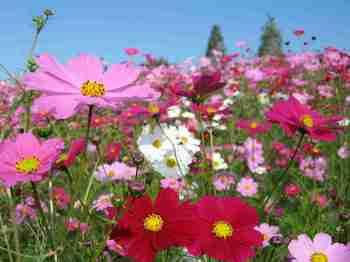 咲き誇る花.jpg