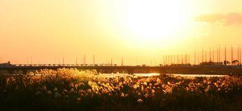 河川敷と夕日.jpg