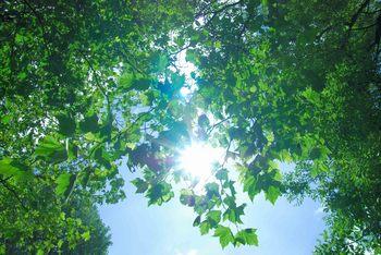 穏やかな日.jpg