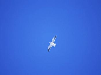 蒼い空.jpg