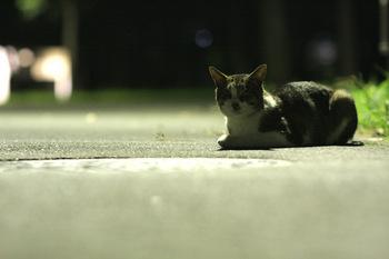 夜猫.jpg